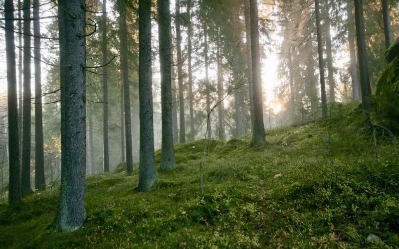 Nuuksiossa-metsan-taikaa-etusivu- Nuuksion-Taika