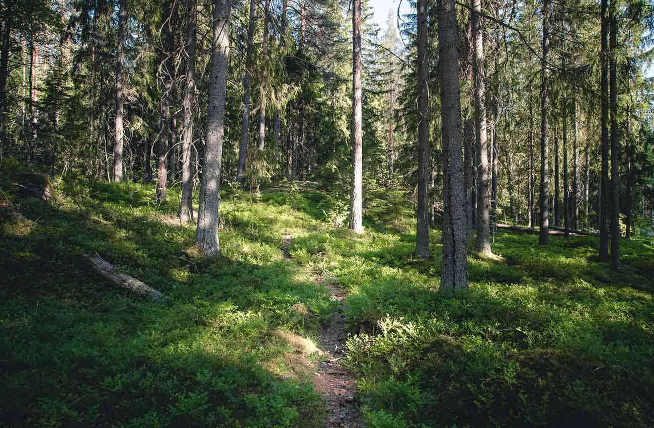 Nuuksion metsän tunnelmaa